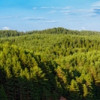 Understanding large-scale plant health, Rezatec analyses satellite data to map tree species and disease in large forested areas